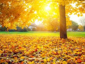 落叶是什么垃圾分类