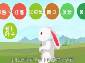 兔子喜欢吃什么 养兔子要注意什么