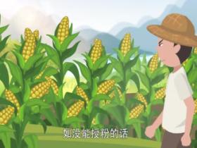 玉米传播种子的方法