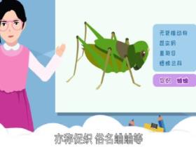 蟋蟀喜欢吃什么 蟋蟀喜欢什么样的环境