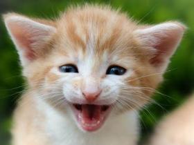猫的一生有几个阶段 哪个阶段都需要陪伴