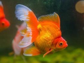 什么鱼好养 新手推荐这几种鱼想养死都难