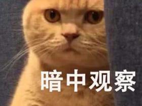 猫咪的道歉方法 如果出现就原谅它吧